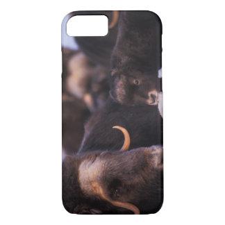muskox, Ovibos moschatus, cow with newborn, iPhone 8/7 Case