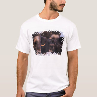 muskox, Ovibos moschatus, cow with newborn, T-Shirt