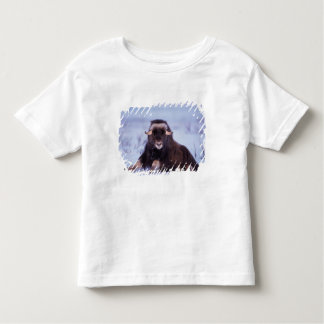 muskox, Ovibos moschatus, young bull on the Toddler T-shirt