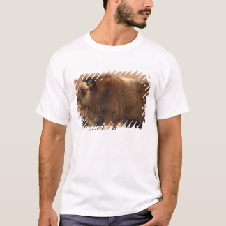 muskox, Ovibos moschatus, youth on the central T-Shirt