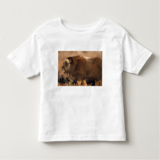 muskox, Ovibos moschatus, youth on the central Toddler T-shirt
