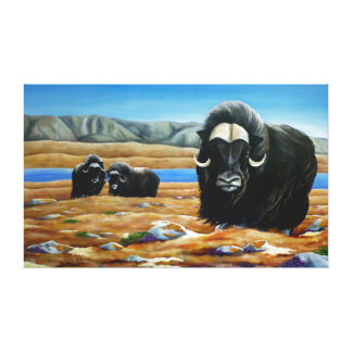 Muskox Painting Canadian Wildlife Canvas Print