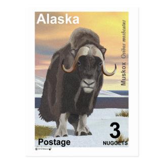 Muskox Tarjetas Postales
