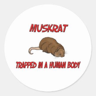 Muskrat atrapado en un cuerpo humano pegatina redonda