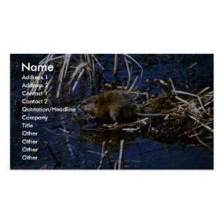 Muskrat Business Card Template