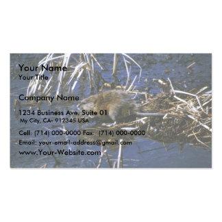 Muskrat Business Card