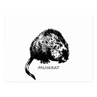 Muskrat (ejemplo) tarjetas postales