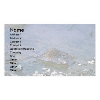 Muskrat en el borde del pantano tarjetas de negocios