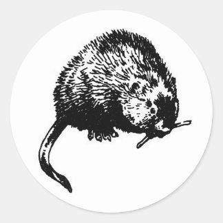 Muskrat (illustration) classic round sticker