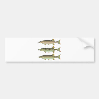 Musky Tiger musky and Northern Pike vector Bumper Sticker