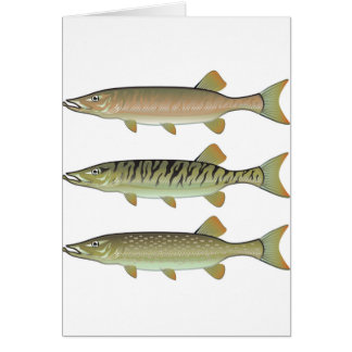 Musky Tiger musky and Northern Pike vector Card