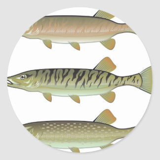 Musky Tiger musky and Northern Pike vector Classic Round Sticker