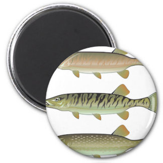 Musky Tiger musky and Northern Pike vector Magnet