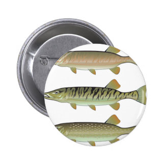 Musky Tiger musky and Northern Pike vector Pinback Button