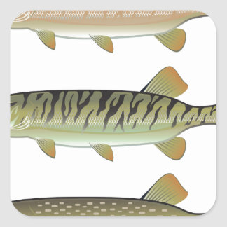 Musky Tiger musky and Northern Pike vector Square Sticker