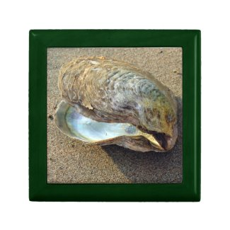 Mussel Sea Shell San Beach Photo Gift Jewelry Box