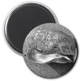 Mussel Seashell Sand Beach Magnet