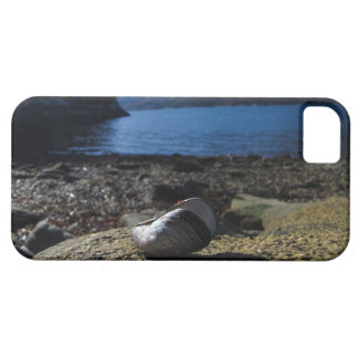Mussel Shell Model iPhone SE/5/5s Case