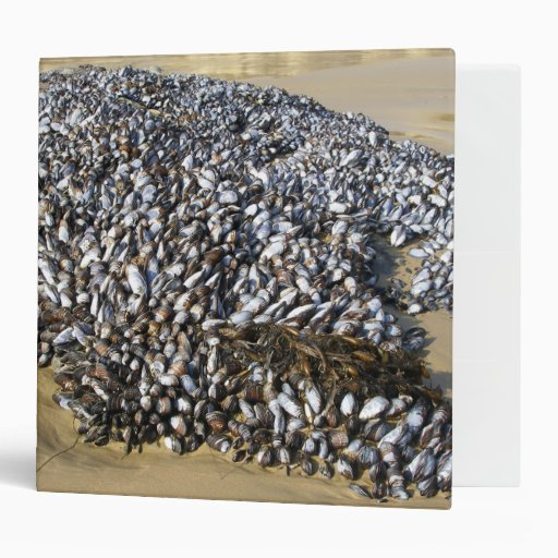 Mussels At The Cove 3 Ring Binder