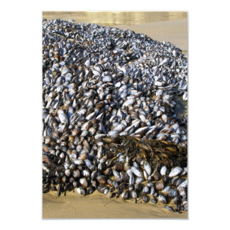 Mussels At The Cove 3.5x5 Paper Invitation Card