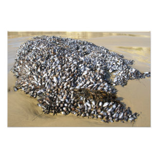 Mussels At The Cove Photo Print