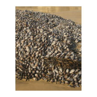 Mussels At The Cove Wood Print