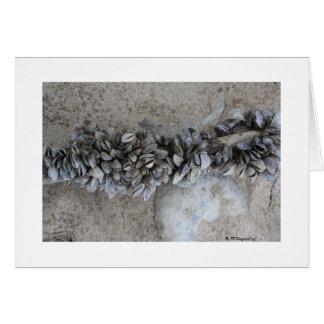 Mussels              By W.Shepard (c)       ... Card