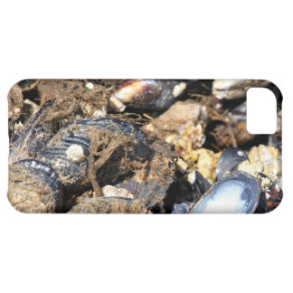 Mussels Case For iPhone 5C