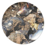 Mussels Plates