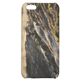 Mussels Sunset iPhone 5C Cases
