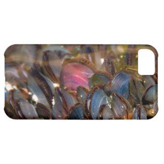 Mussels Under the Ocean iPhone 5C Cases