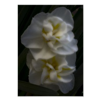 Must be a Dream Narcissus Daffodils zazzle_print