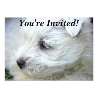 Must Love Dogs Party Invitations