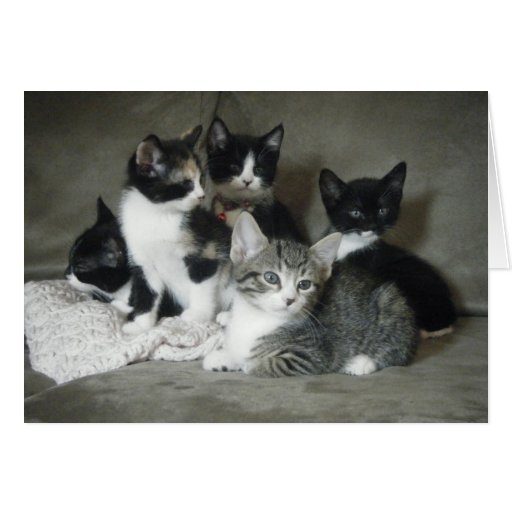 Must Love Kittens Card