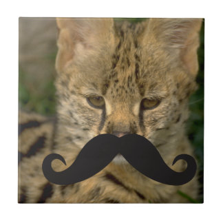 Mustache Qpc Template Ceramic Tile