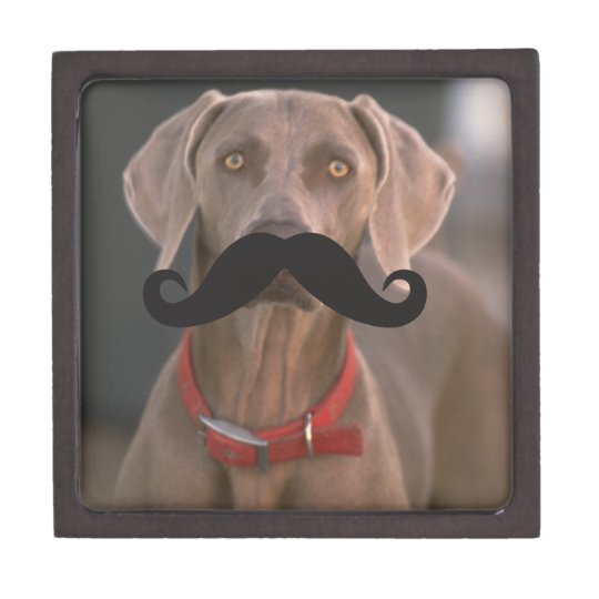 Mustache Qpc Template Gift Box