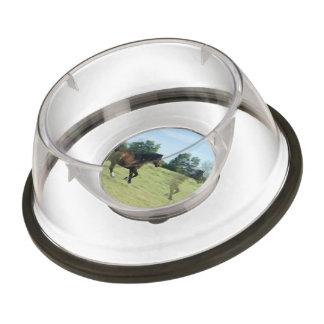mustang-5 pet bowl