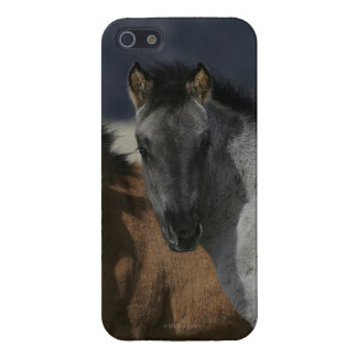 Mustang Foal Headshot Cover For iPhone SE/5/5s