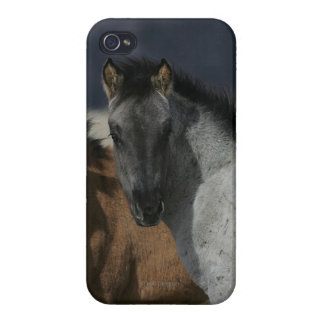 Mustang Foal Headshot iPhone 4/4S Cases
