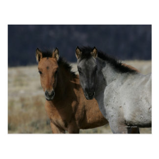 Mustang Foal Headshot Postcard