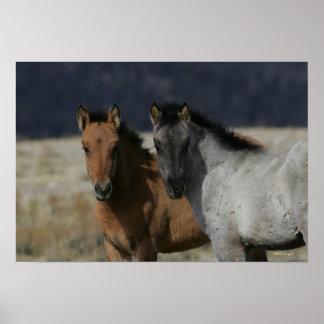 Mustang Foal Headshot Poster