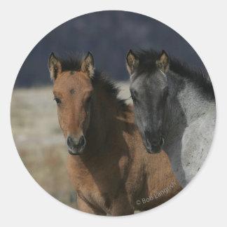 Mustang Foal Headshot Round Sticker