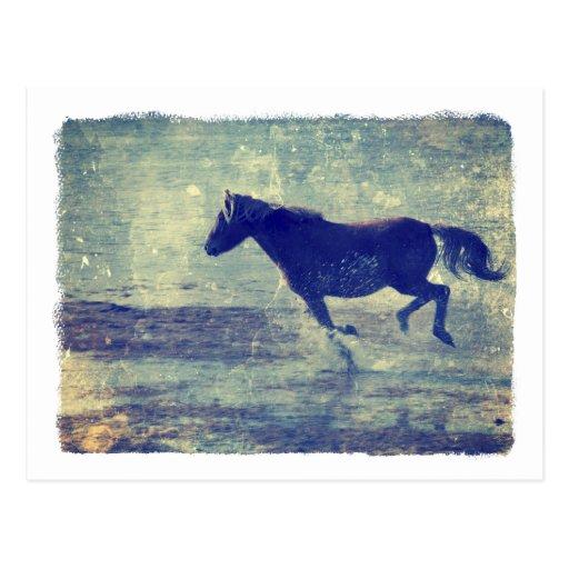 Mustang Gallops On Beach Postcard