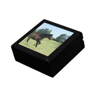 Mustang  Gift Box