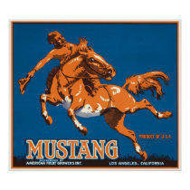 Mustang Horse Cowboy Los Angeles California USA Poster