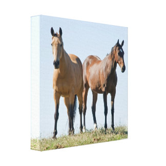 Mustang Horse Pair Canvas Print