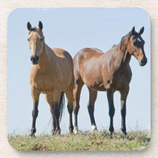 Mustang Horse Pair Set of Coasters