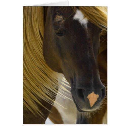 Mustang Horse Photo Greeting Card