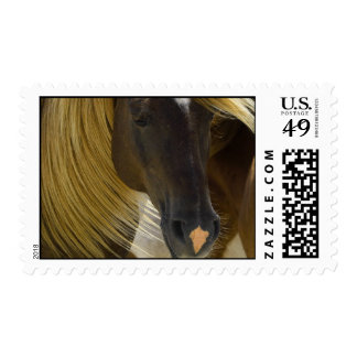 Mustang Horse Photo Postage Stamp