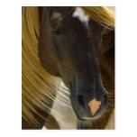 Mustang Horse Photo Postcard